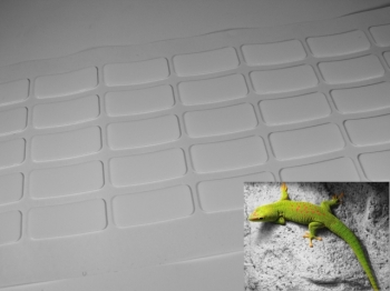 Gecko® - rectangles with adhesive 31 backside