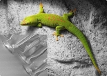 Gecko® Nanoplast® - without adhesive - width 100mm - natural - 0,25m